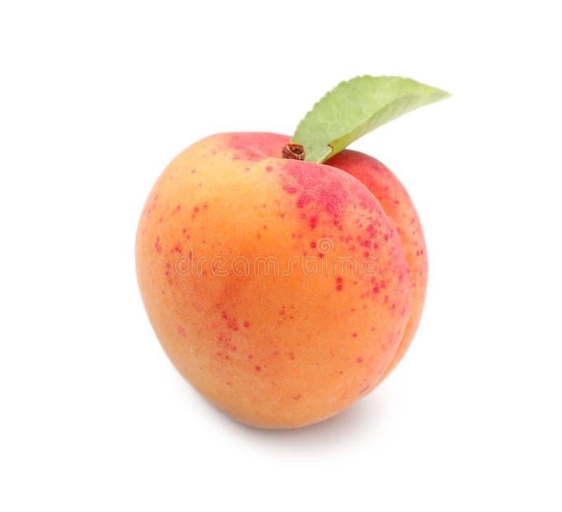 Mogen aprikos p? vit bakgrund royaltyfria foton
