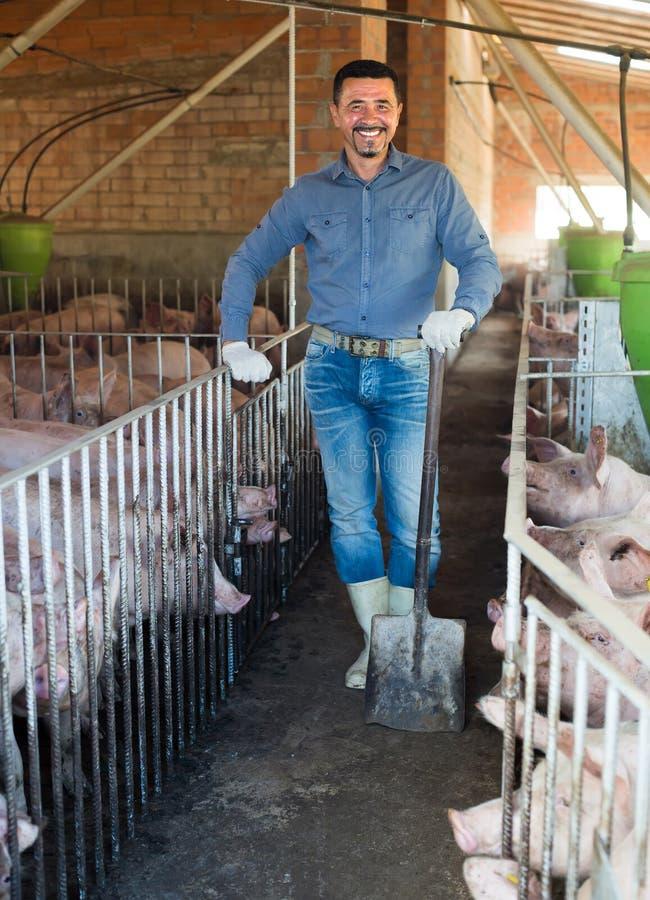 Mogen bonde i hangar med gödsvin royaltyfria bilder
