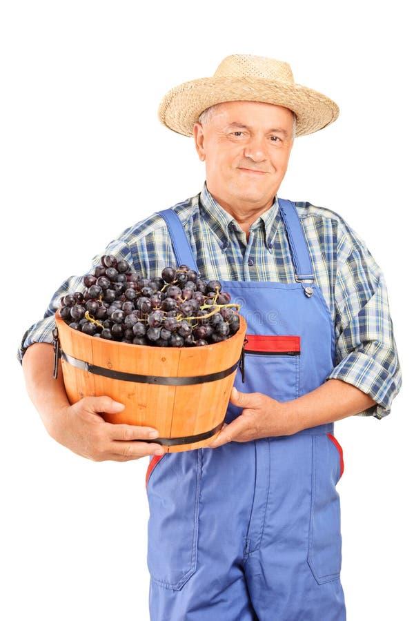 Mogen bonde som rymmer en hink full av druvor arkivbild