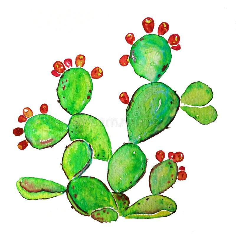 Mogen kaktus för taggigt päron med frukter Vattenfärgrasterillustration vektor illustrationer