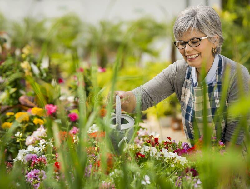Mogen kvinna som bevattnar blommor royaltyfri bild