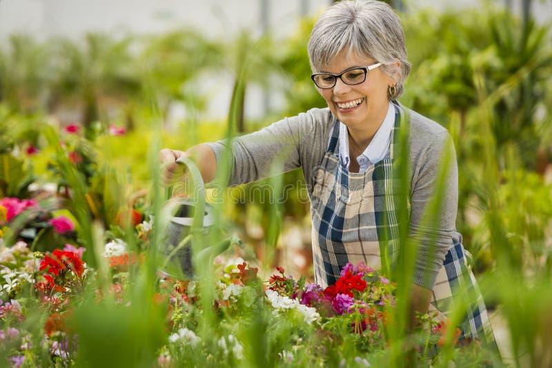 Mogen kvinna som bevattnar blommor arkivfoton