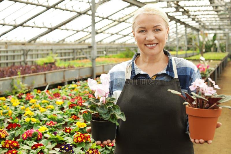 Mogen kvinna som rymmer krukor med att blomma blommor i växthus fotografering för bildbyråer