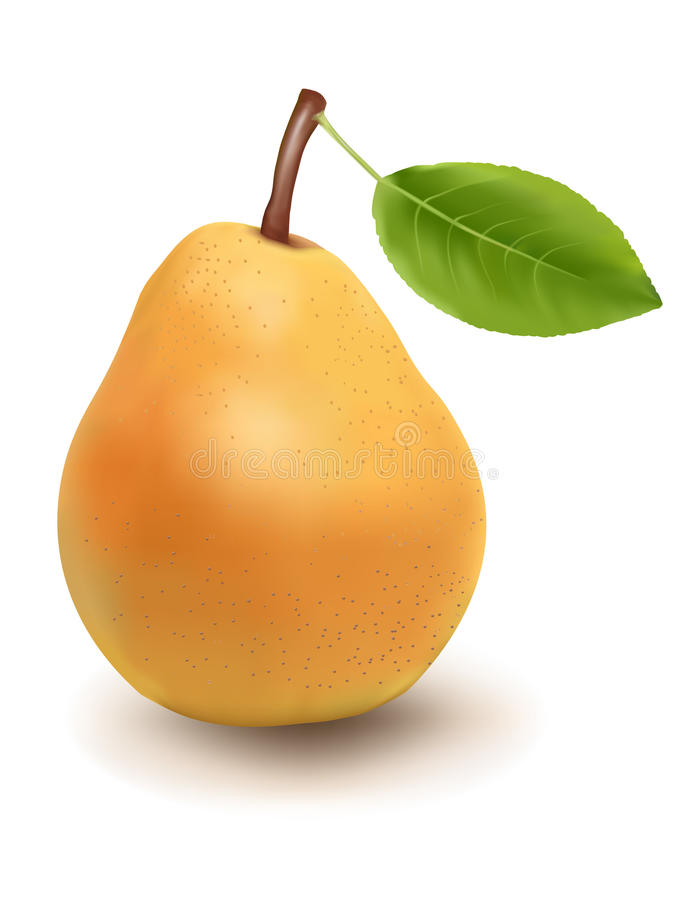 mogen leafpear stock illustrationer