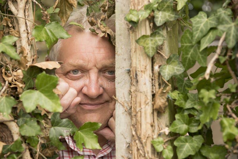 Mogen man som spionerar till och med en murgrönaväxt arkivfoton