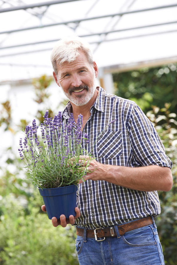 Mogen man som väljer växter på den trädgårds- mitten arkivbilder