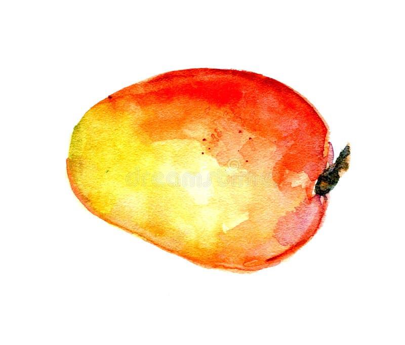Mogen mango som isoleras på vit bakgrund vattenfärg royaltyfri foto