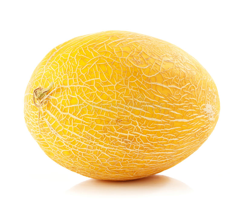mogen ny melon arkivbilder