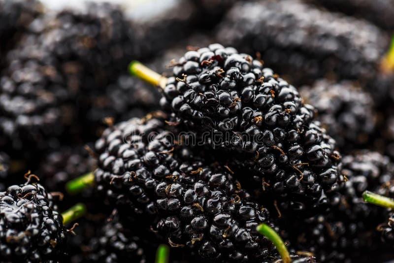 Mogen och ny frukt av den svarta mullbärsträdet, sund mat av saftig mullbärsträdfrukt Närbild texturen av bären på det fullt royaltyfria bilder