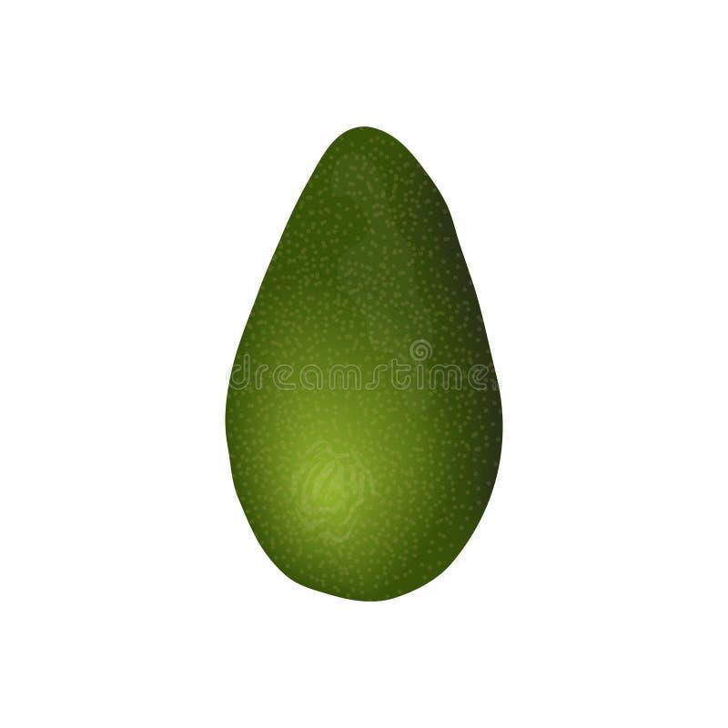 Mogen rå frukt för avokado Perseaamericana exotisk helhet Gr?n peel Saftigt isolerat på vit bakgrund Toppen mat, stock illustrationer