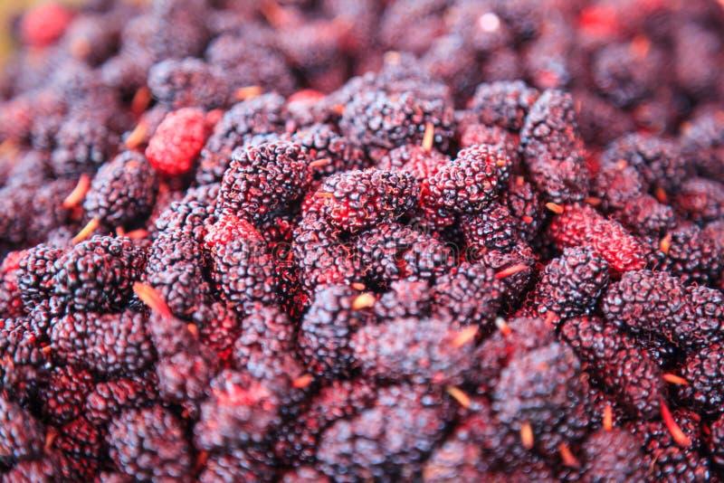 Mogen röd och mörk purpurfärgad söt bakgrund för anstrykningmullbärsträdfrukt Vård- fördelar av mullbärsträd inkluderar, för att  royaltyfria foton