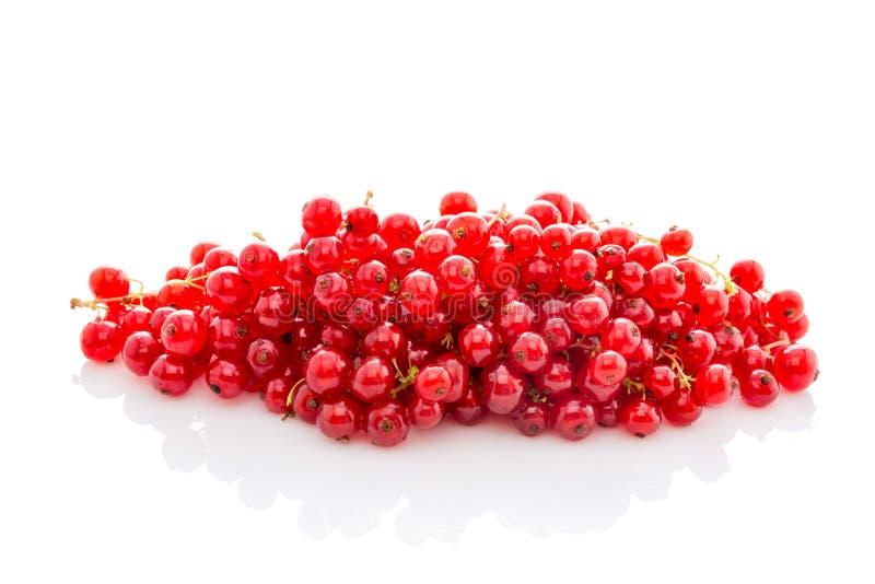 Mogen röd vinbär för grupp som isoleras på vit arkivbild