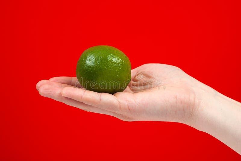 Mogen saftig limefrukt i handen som isoleras på röd bakgrund fotografering för bildbyråer