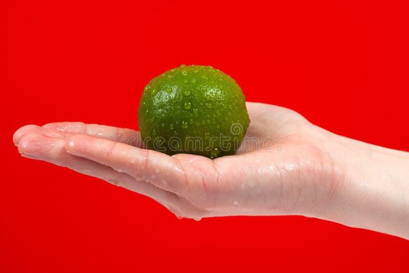 Mogen saftig limefrukt i handen som isoleras på röd bakgrund royaltyfri fotografi