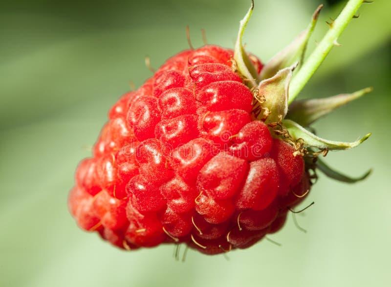 Download Moget hallon arkivfoto. Bild av natur, vitamin, rött - 27287648