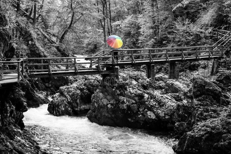 Moget kvinnaanseende på en träbro över floden med det färgrika paraplyet på en solig höstdag royaltyfria bilder