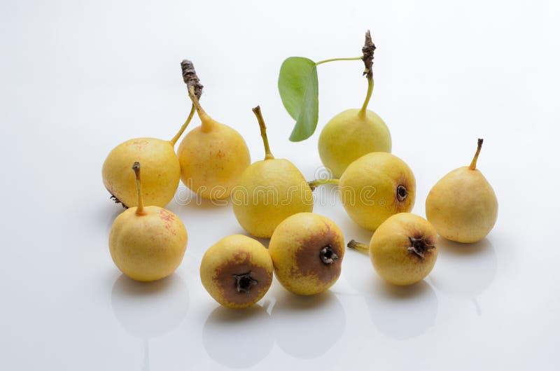 Moget löst päron för frukt på en isolerad vit bakgrund arkivfoto
