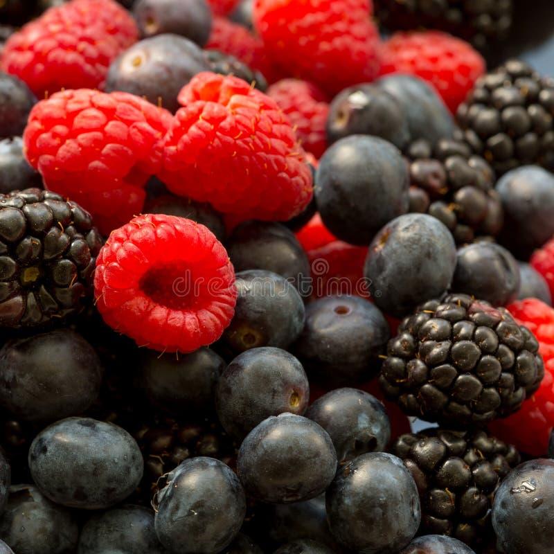 Moget nytt saftigt organiskt blåbär, hallon och björnbär, sommarmatbakgrund royaltyfria foton