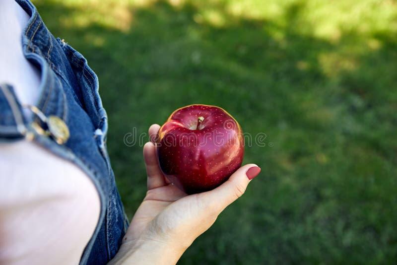 Moget rött äpple i hand arkivfoton