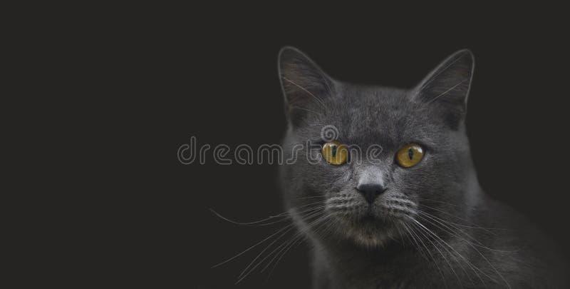 Moggy猫画象 免版税库存照片