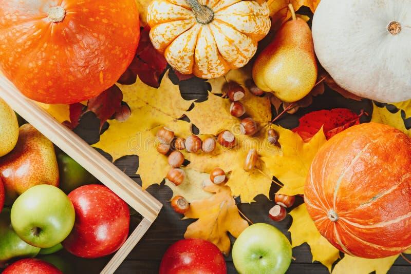 Mogna äpplen i en ask med pumpor, päron, hasselnötter och färgrika lönnlöv på mörk träbakgrund Säsongsbetonad bild för höst T arkivbilder