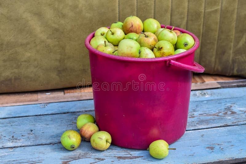 Mogna äpplen i en rosa korg på bänk under solljus arkivfoton