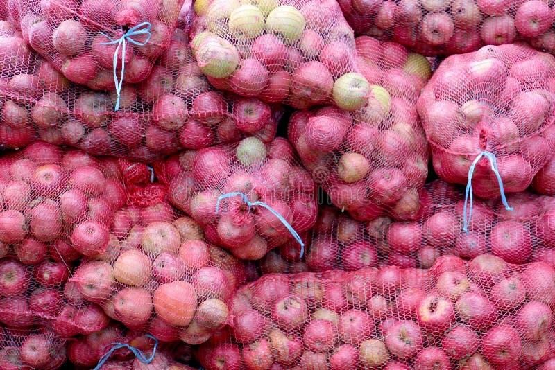 Mogna äpplen i ett ingrepp hänger löst för bransch royaltyfria bilder