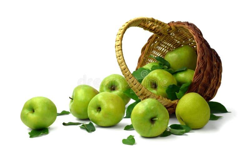 Mogna äpplen sprids ut ur korgen Isolerat på vit royaltyfria foton