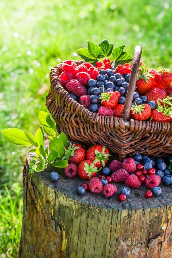 Mogna bärfrukter i trädgård fotografering för bildbyråer