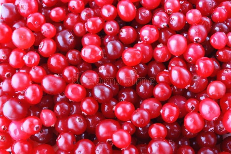 mogna cranberries royaltyfri fotografi