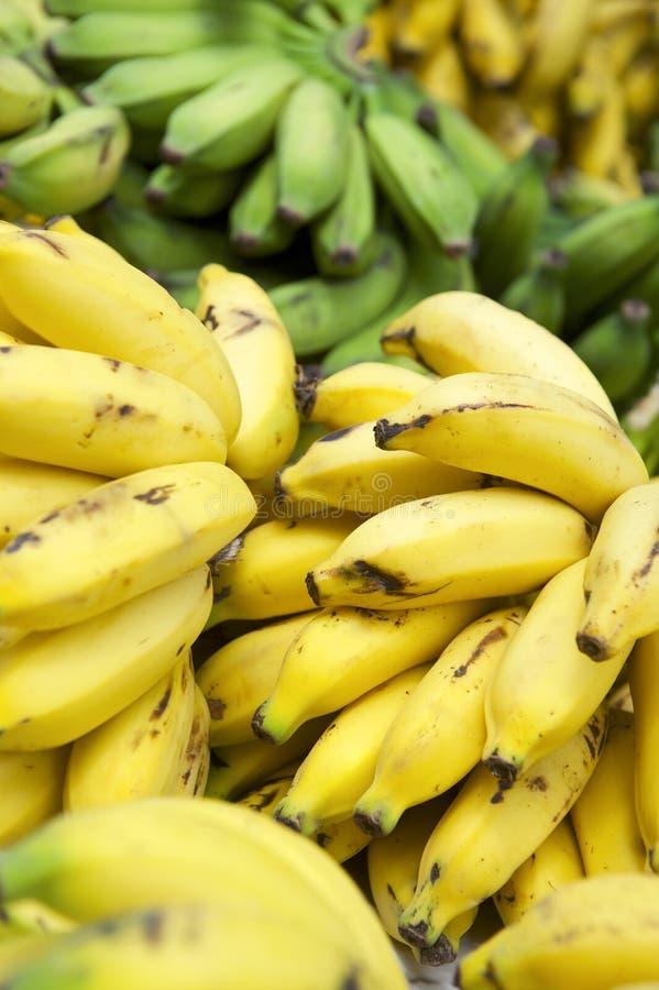 Mogna gula banangrupper på den brasilianska bondemarknaden arkivfoto