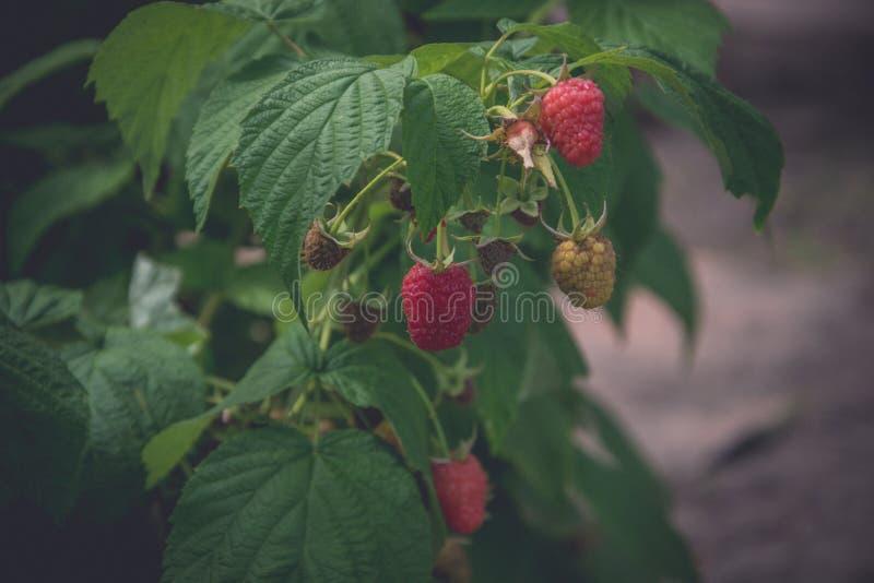 Mogna hallon för sommar` s i trädgården royaltyfri foto