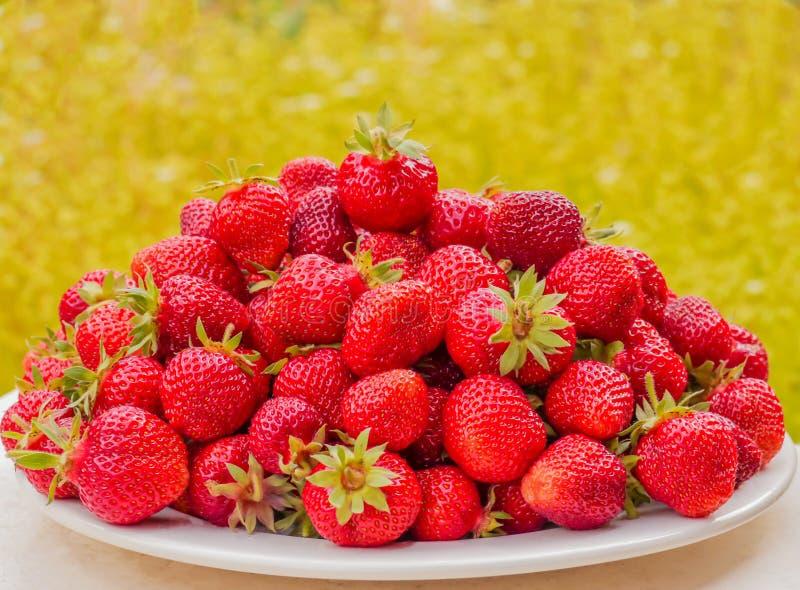 Mogna jordgubbar på en vit platta Massor av röda bär Suddig gräsplan- och gulingbakgrund royaltyfri fotografi