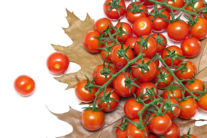 Mogna körsbärsröda tomater och höstsidor på en vit bakgrund royaltyfri fotografi