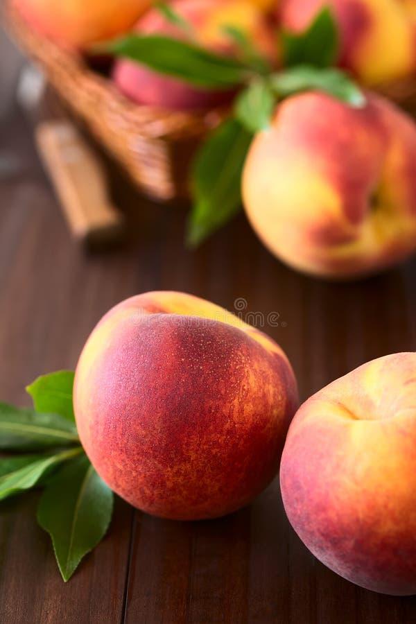 mogna nya persikor fotografering för bildbyråer