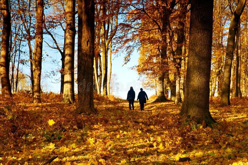 Mogna par som går i färgrik höst, parkerar, banaräkningen vid gula orange sidor arkivfoton