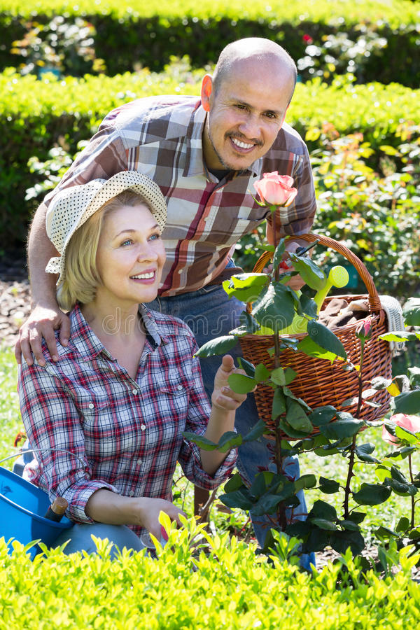 Mogna positiva par som är förlovade, i att arbeta i trädgården royaltyfri bild