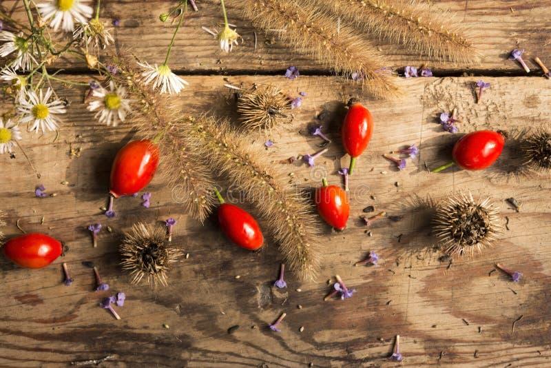 Mogna röda hund-ros frukter med gräs, vita tusenskönor, purpurfärgade violets på en gammal trätabell arkivfoton