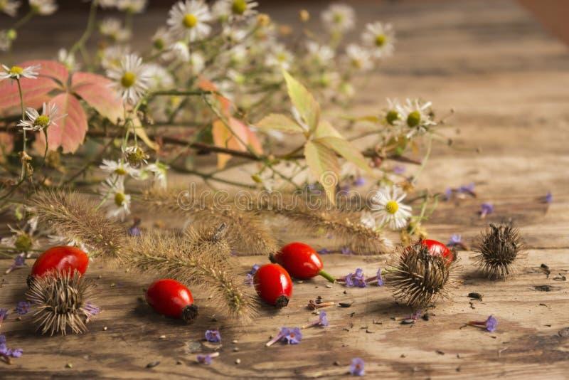 Mogna röda hund-ros frukter med rosa och gröna sidor, vita tusenskönor, purpurfärgade violets royaltyfria bilder