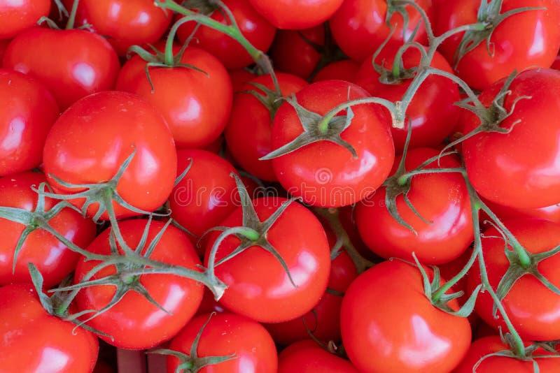 Mogna röda tomater på en filial på en solig dag market tomater textur royaltyfri foto