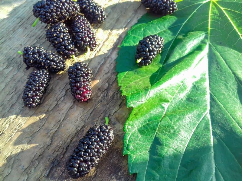 Mogna svarta mullbärsträd frukt och mullbärsträdblad på träbakgrund kopiera avst?nd hav f?r close f?r bakgrundsb?rbuckthorn upp N royaltyfria bilder