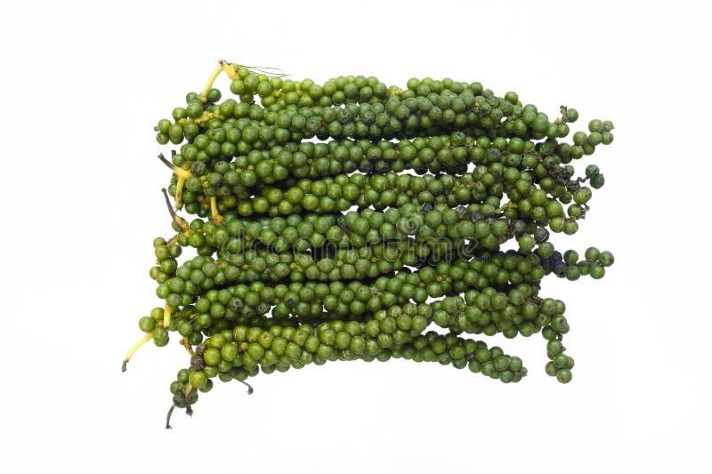 Mognade gröna pepparkornstjälk royaltyfri foto