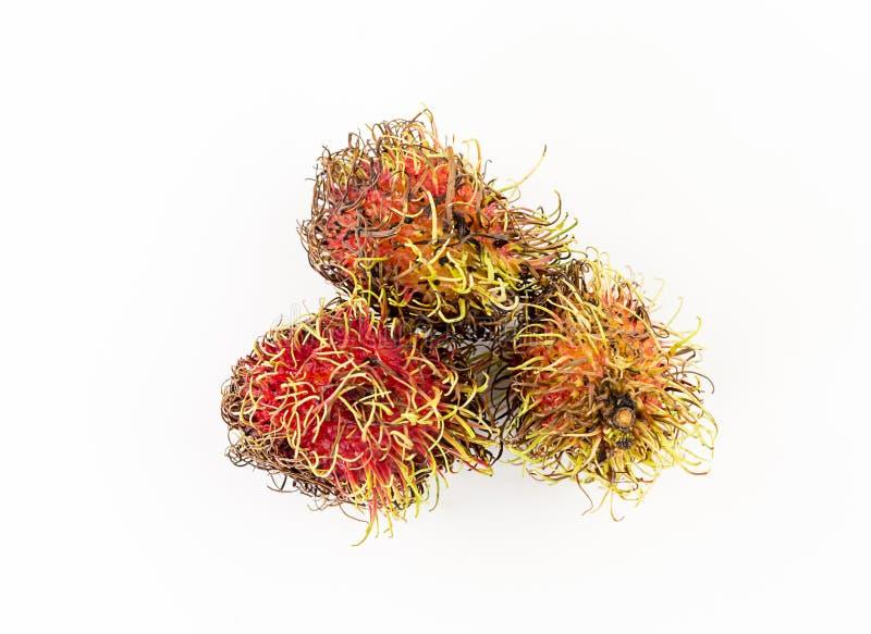 Mognar exotisk frukt för Rambutan tre med långa mustaschforsar, frukt med söt stoppning arkivbilder
