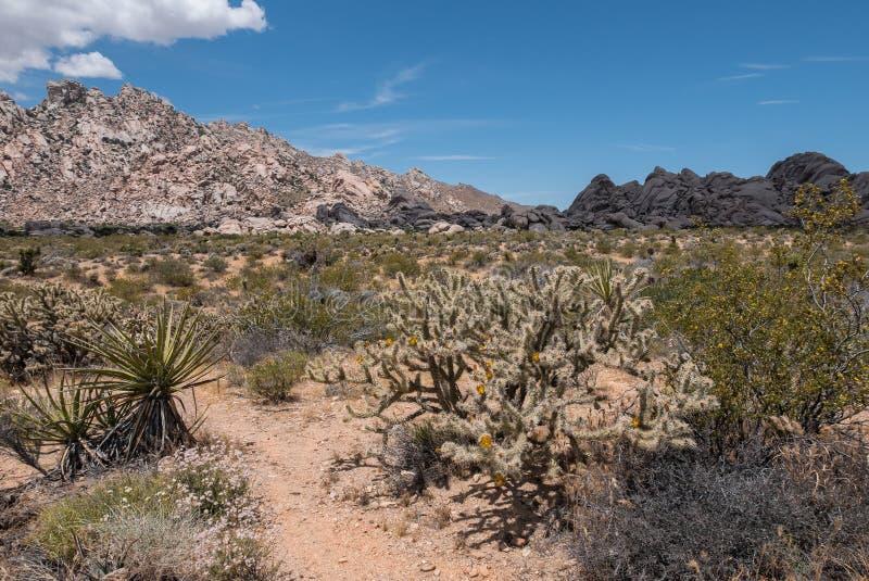 Mohave National Preserve, desert landscape stock image