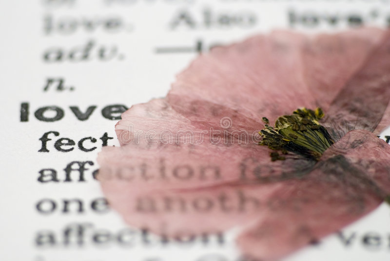 Mohnblumeblume auf Buch stockbild