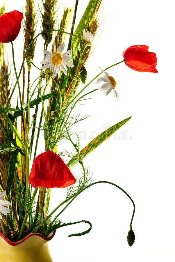 Mohnblumeblumenstrauß der wilden Blumen stockfotografie
