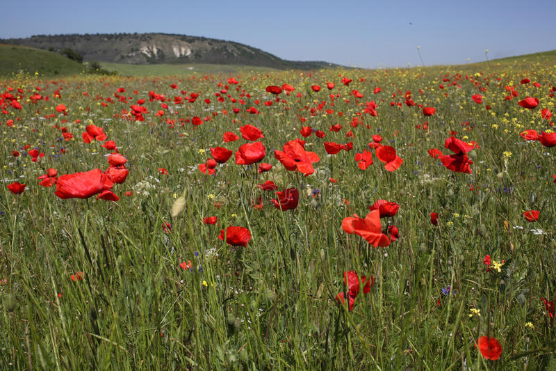 Mohnblumefeld in Krim lizenzfreies stockfoto