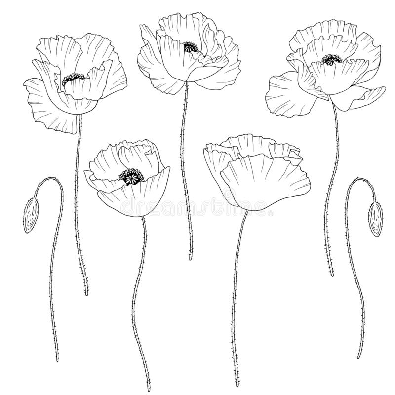 Mohnblumen Skizze Vektor Abbildung Illustration Von Skizze 28591420