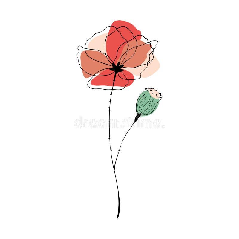 Mohnblumenblume und -kapsel stock abbildung
