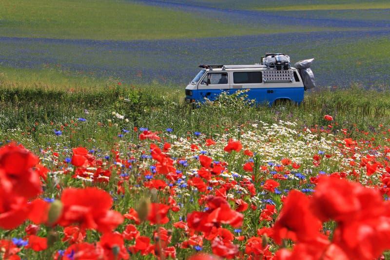 Mohnblumenfeld der Abflussrinne der alten deutschen Weinlese campervan kreuzendes schönes, Polen lizenzfreie stockfotos